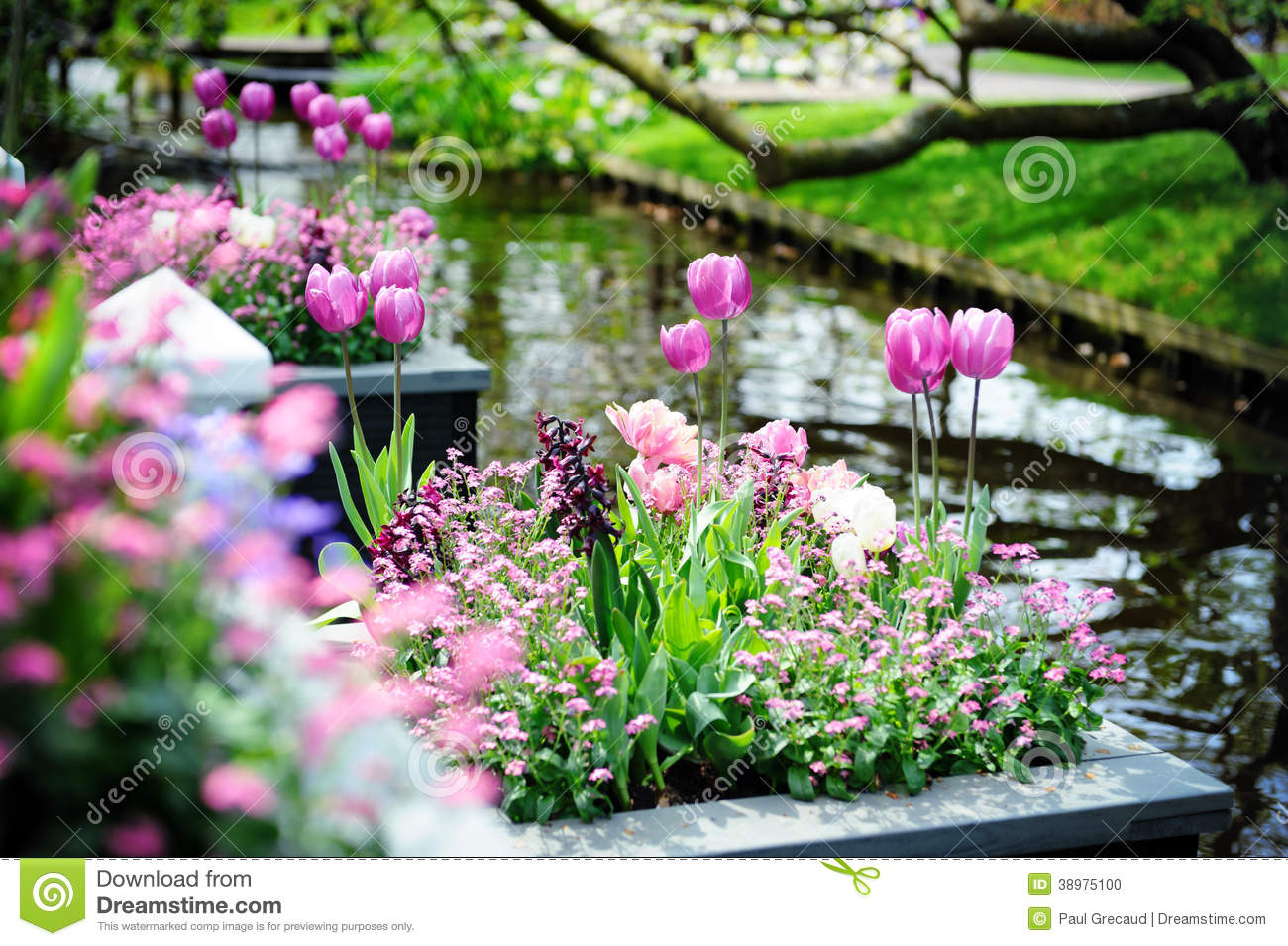 Related keywords suggestions for jardines de flores hermosas for Catalogo de flores de jardin