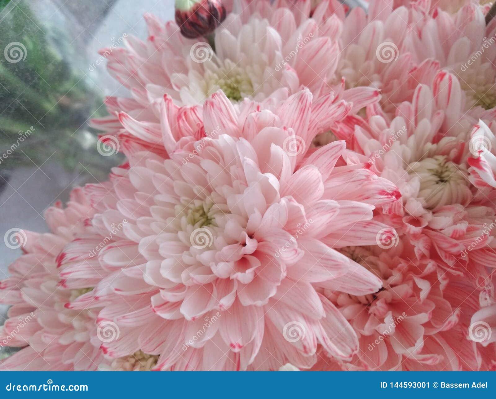 Flores hermosas que florecen bajo Sun, diversos tipos de la primavera de flores