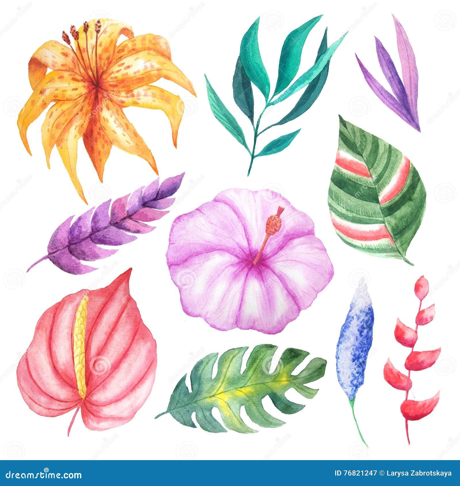 Flores Hojas Y Plantas Tropicales De La Acuarela Stock De