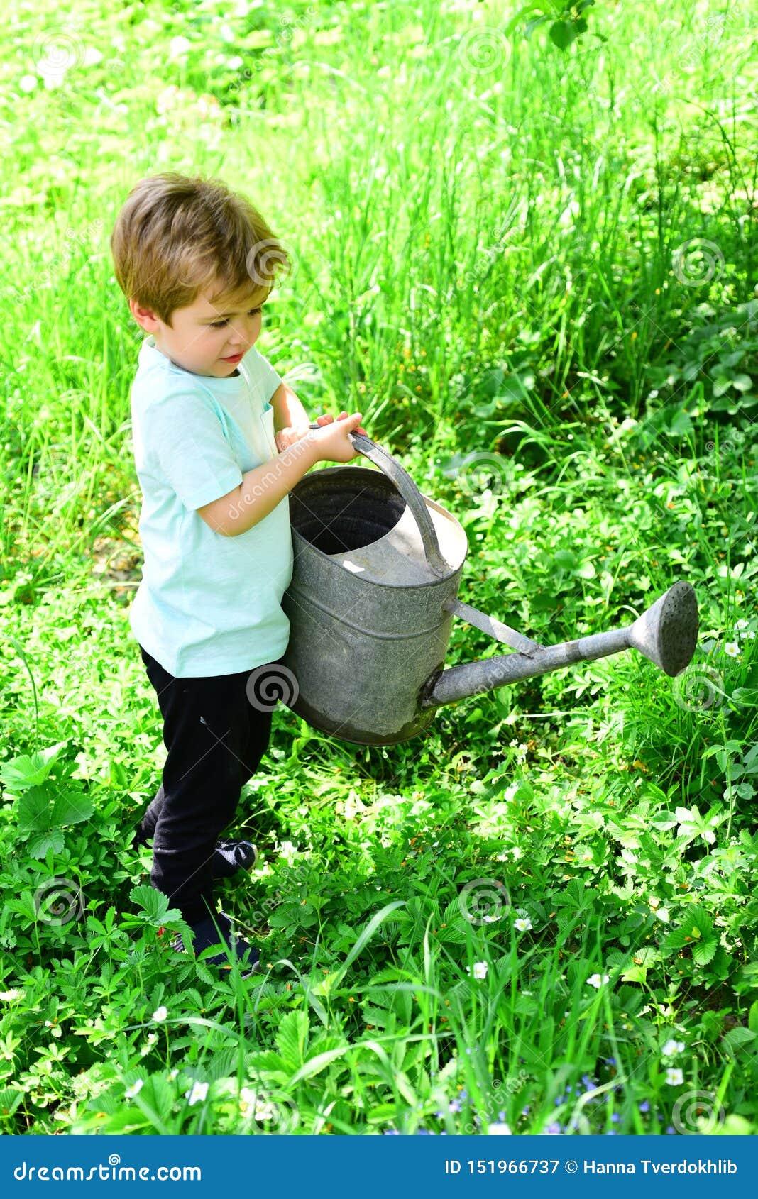 Flores jovenes del agua del muchacho e hierba verde con la ayuda del pote de viejo, grande y pesado riego El niño ayuda con el ja