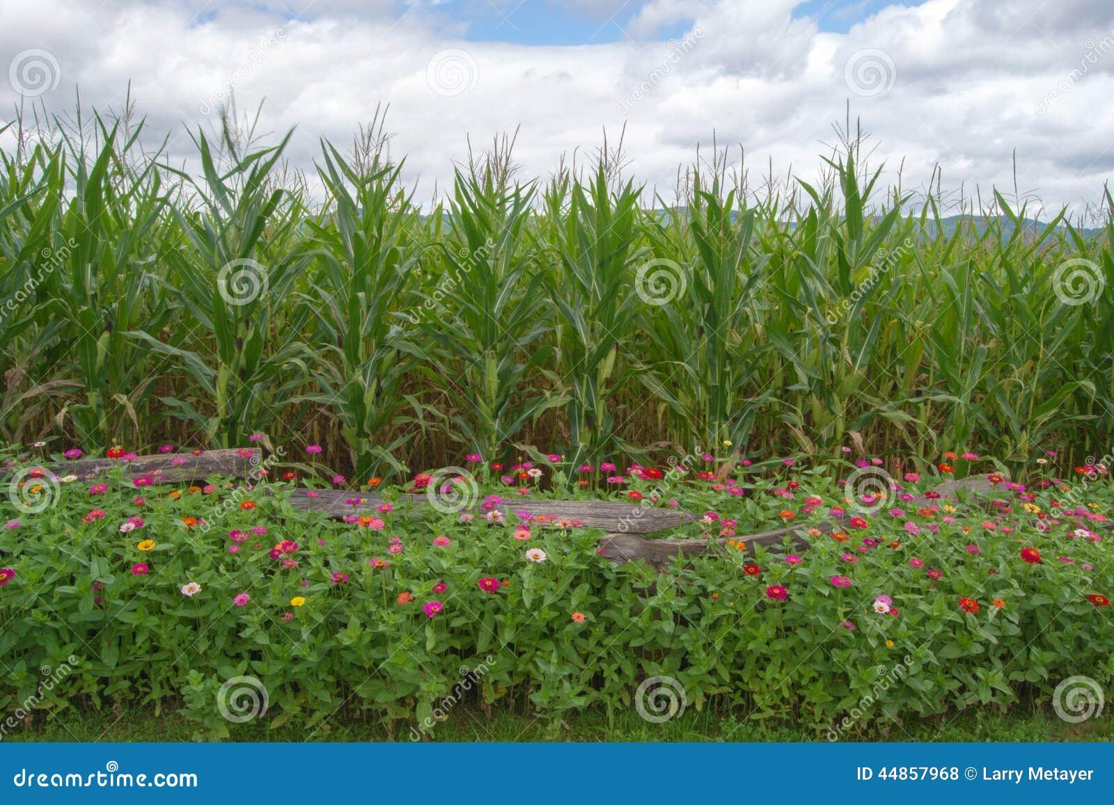 Flores, maíz, montañas y cielo