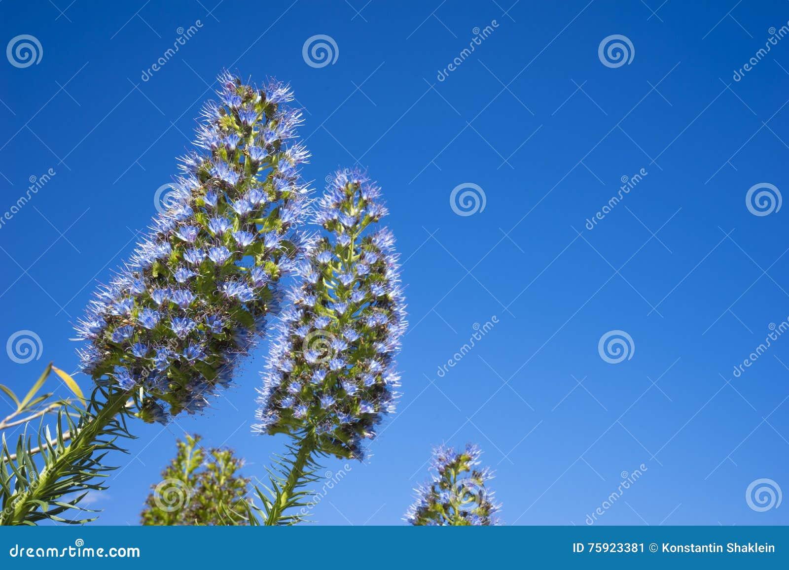 Flores mullidas sobre el fondo del cielo azul