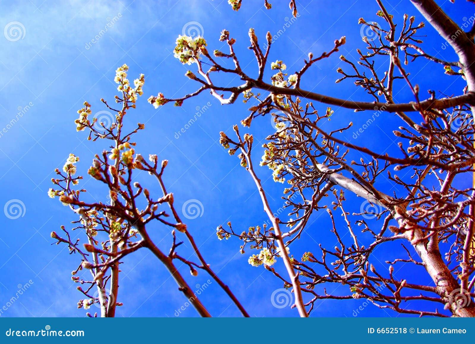 Flores na árvore na mola