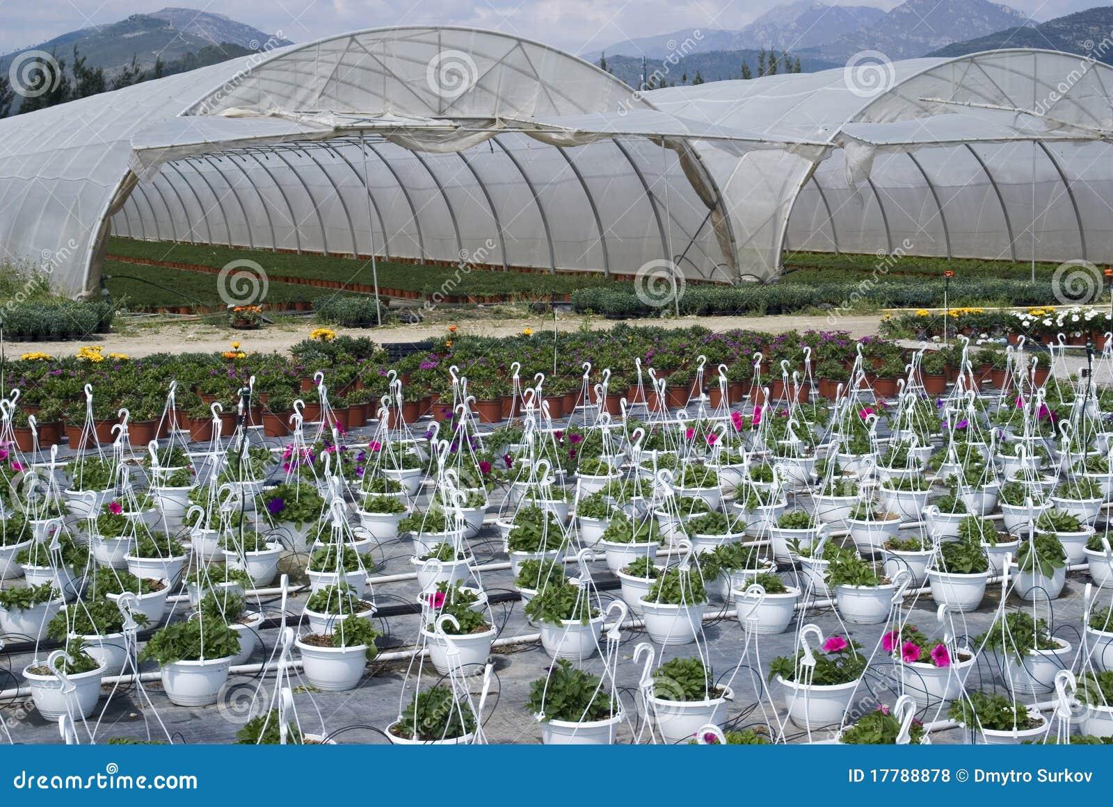 Flores na estufa fotos de stock royalty free imagem - Foto estufa ...
