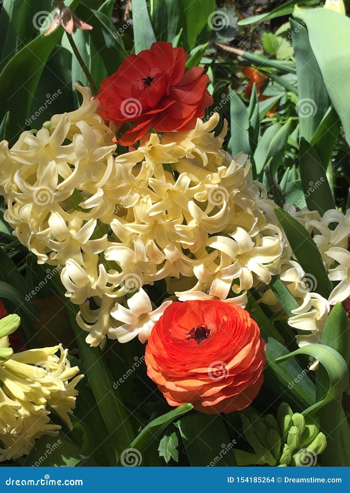 Flores na flor cheia