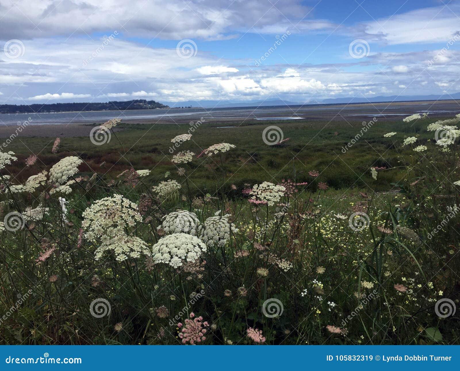 Flores na maré baixa, Royston Seaside Trail, Royston, BC