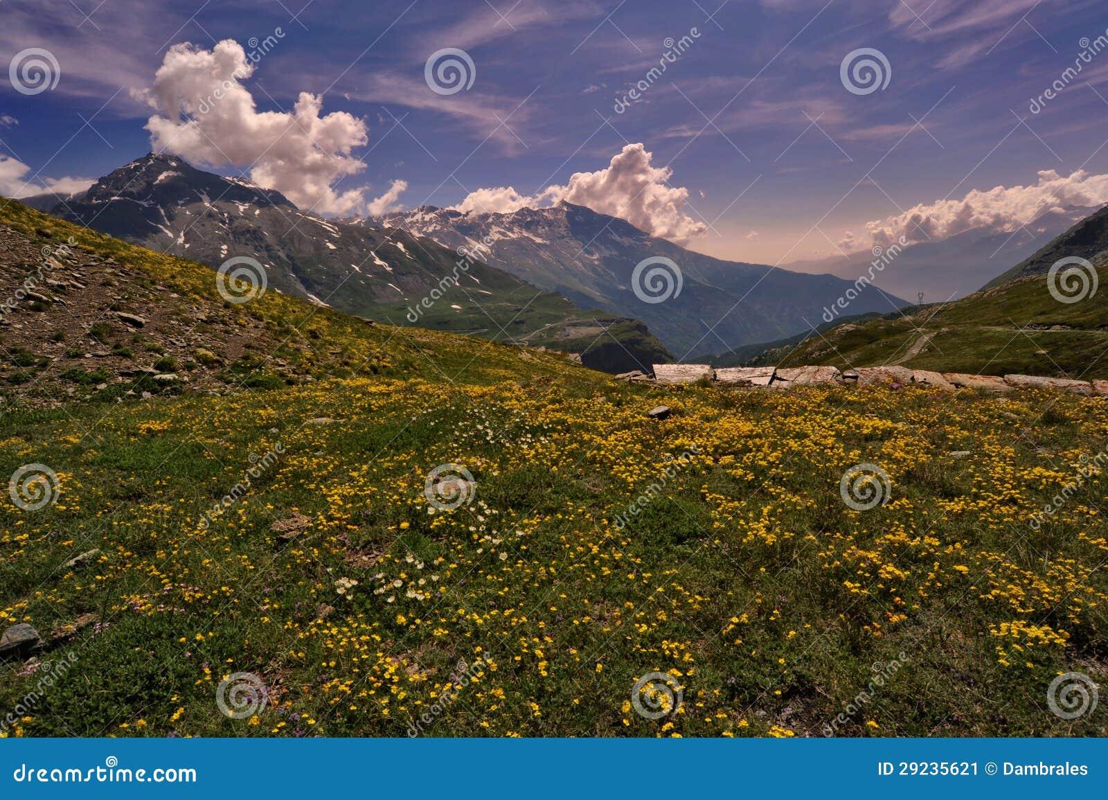 Download Flores na montanha imagem de stock. Imagem de flores - 29235621