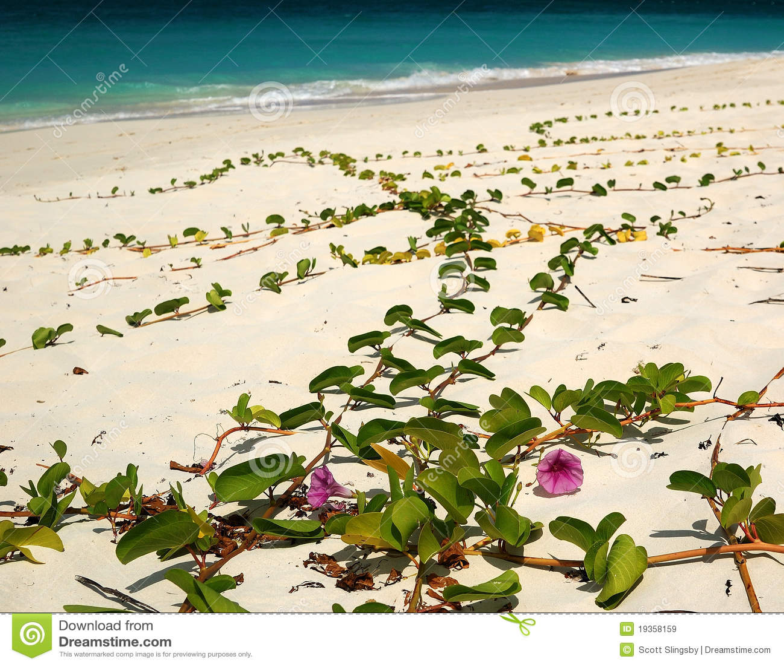Flores na praia