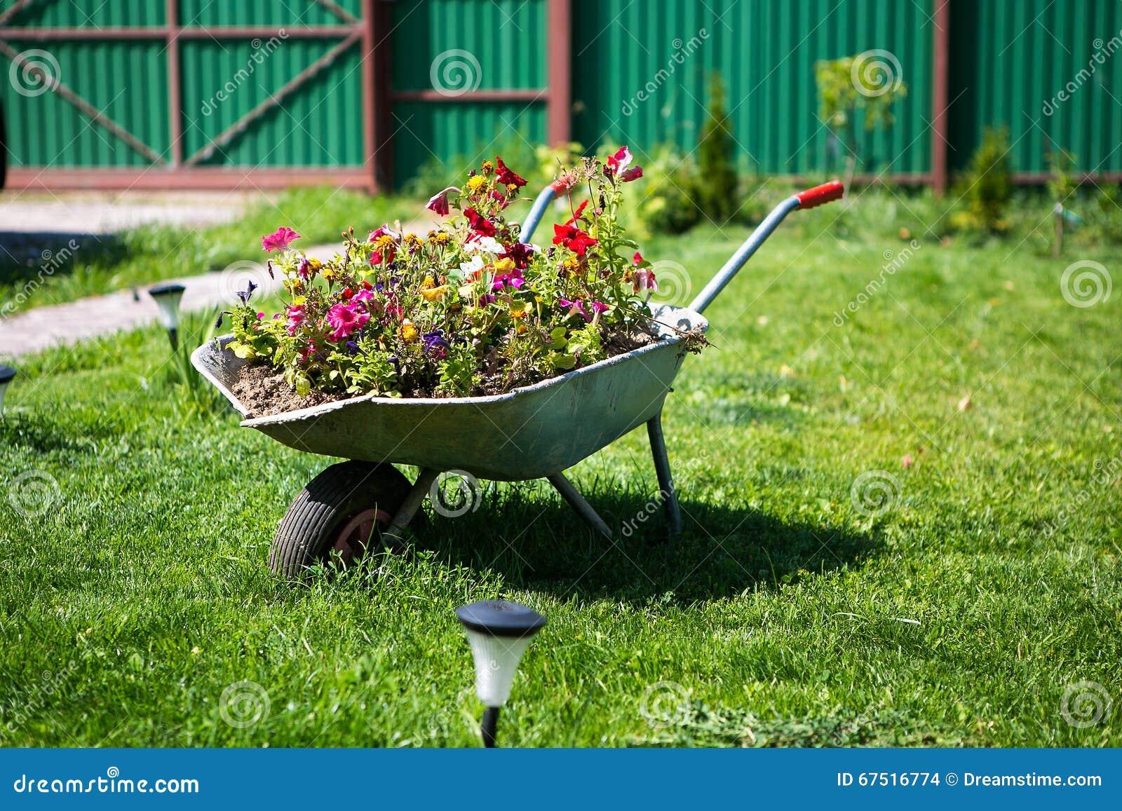 Populares Flores No Carrinho De Mão Do Jardim Foto de Stock - Imagem de  QD36
