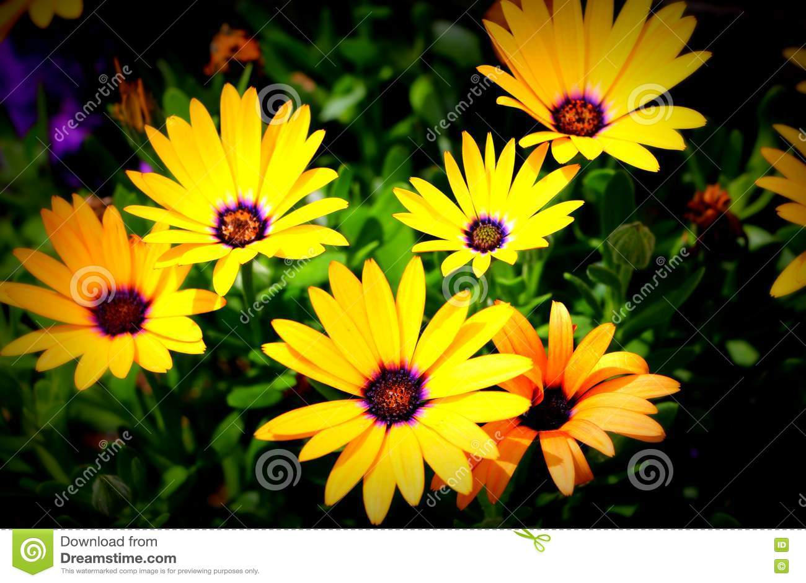 Flores no centro Montpelier da fuga de Oregon, Idaho