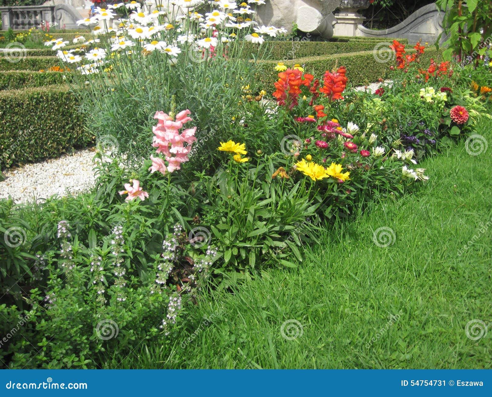 Flores O Jardim Do Ver?o Plantas No Jardim Ajardinado ...