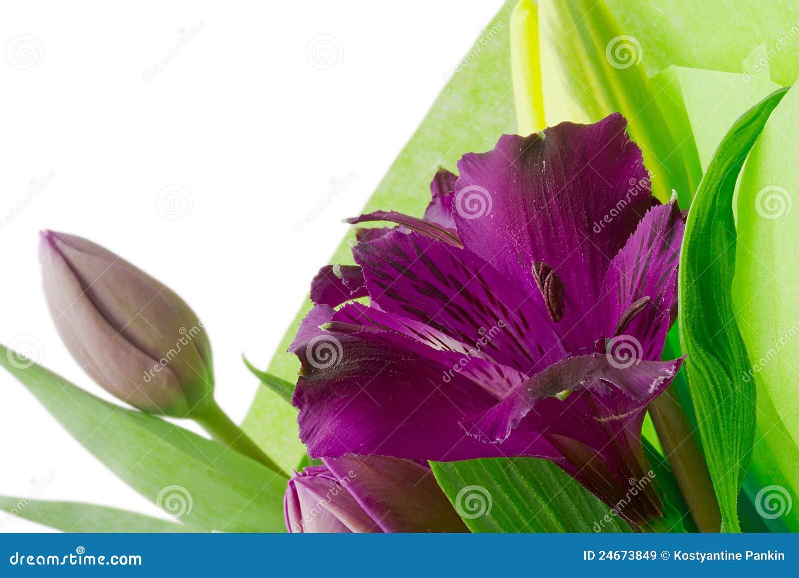 Flores púrpuras del Alstroemeria