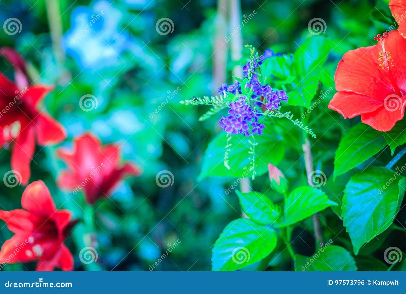 Flores Purpuras Del Erecta De Duranta Entre Las Flores Rojas Nombres