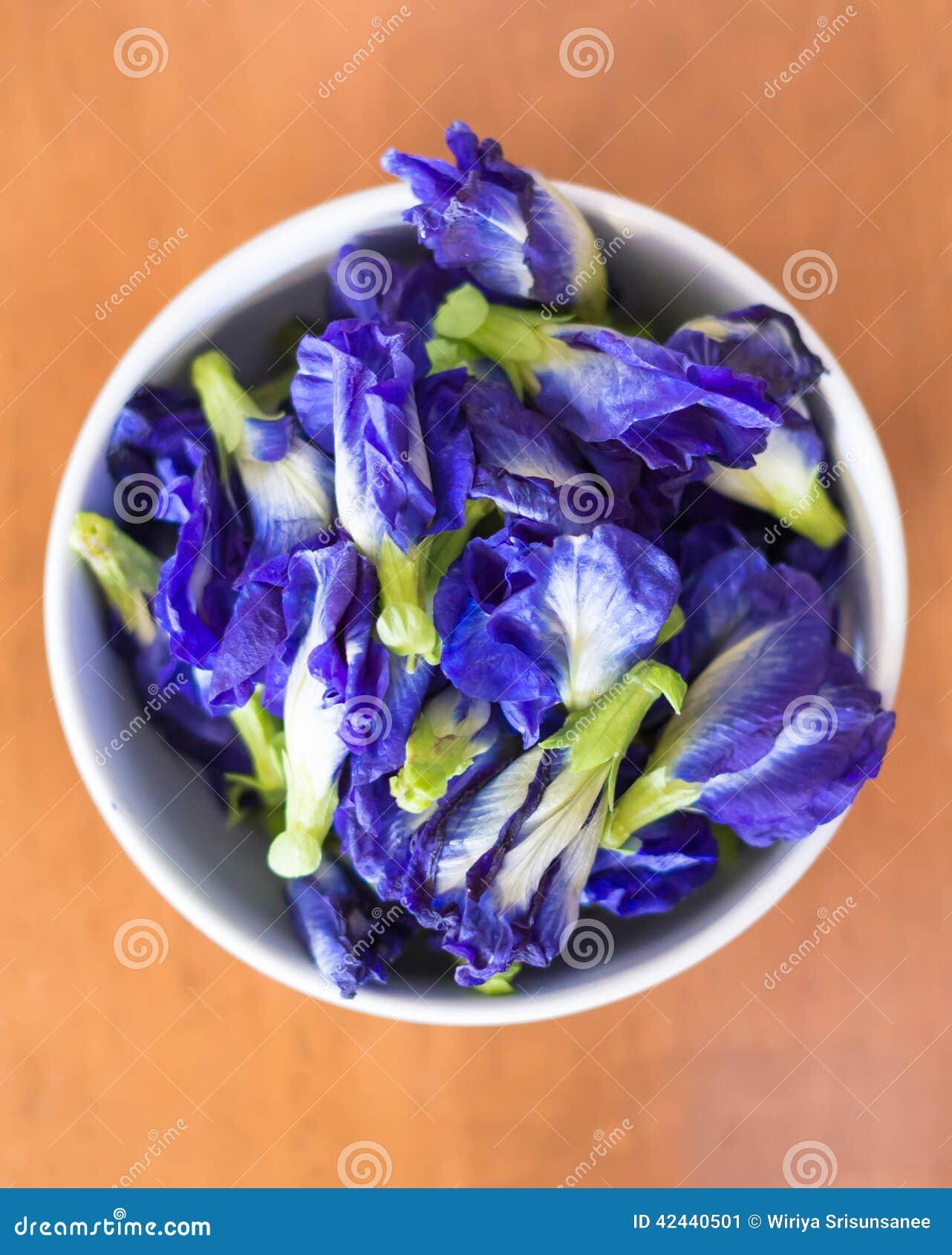Flores púrpuras violetas del guisante de mariposa, pigeonwings asiáticos del color