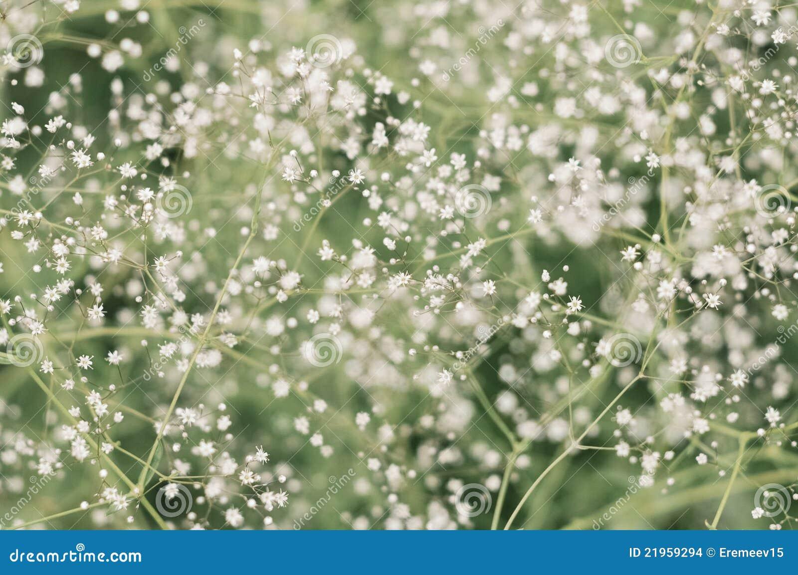 Flores Pequenas Foto De Stock. Imagem De Suficiência
