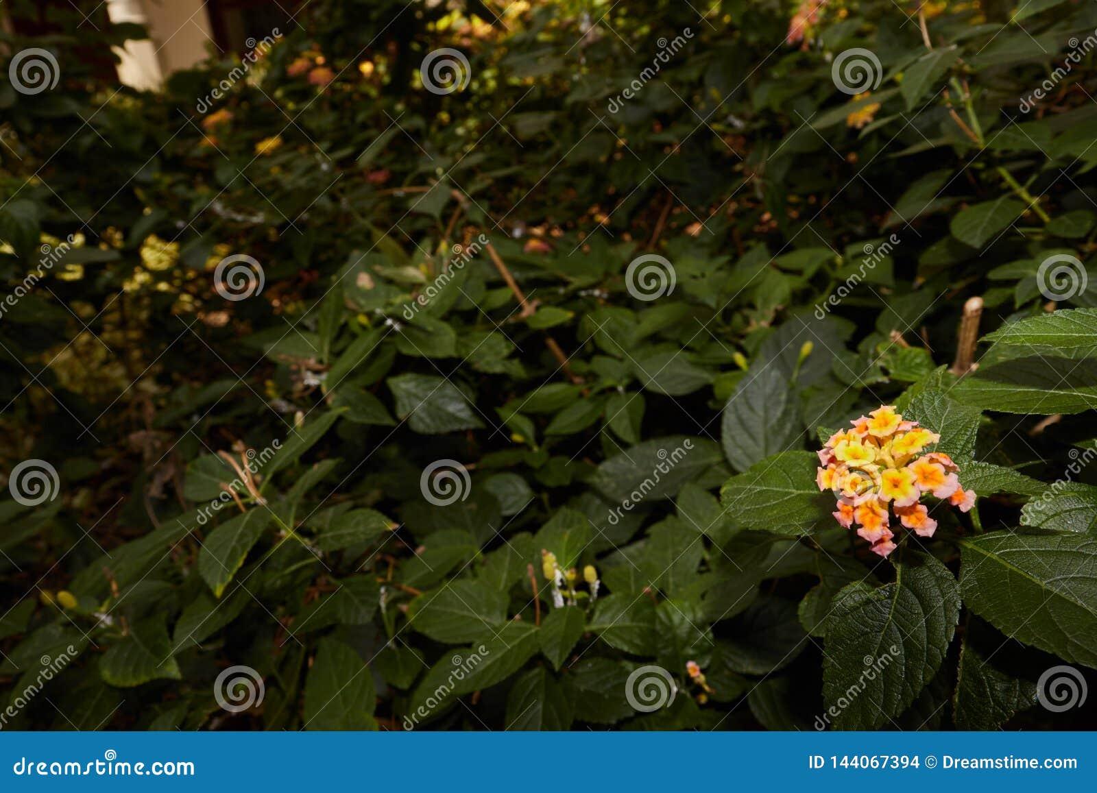 Flores pequenas com um escuro - fundo verde