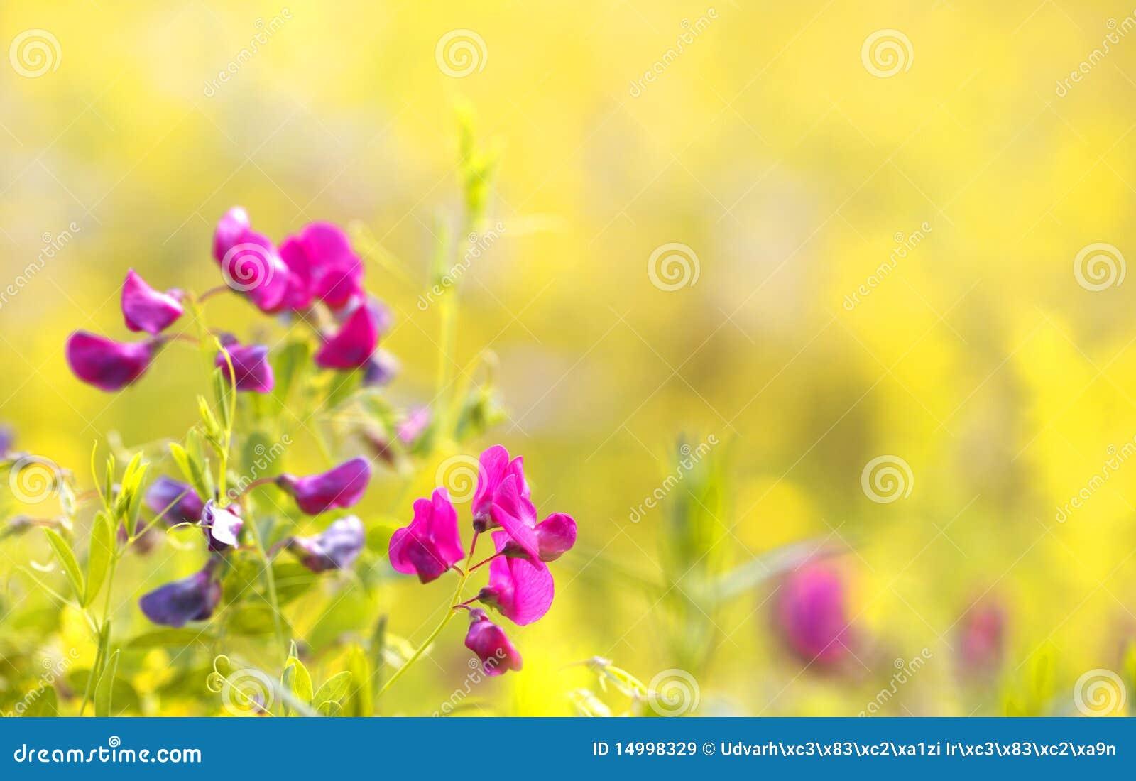 Flores Pequenas Cor-de-rosa No Campo Imagem De Stock