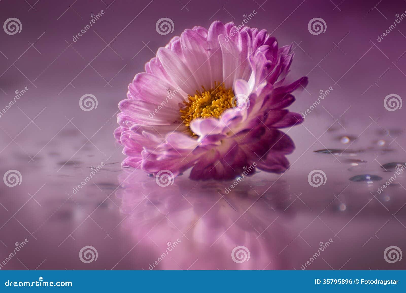Flores preciosas imagen de archivo libre de regal as imagen 35795896 - Fotos flores preciosas ...
