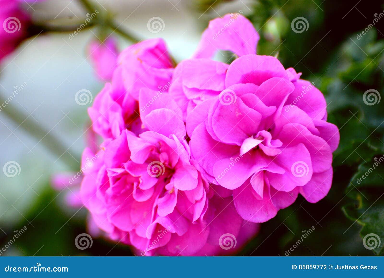 flores preciosas fotografa de archivo - Fotos De Flores Preciosas
