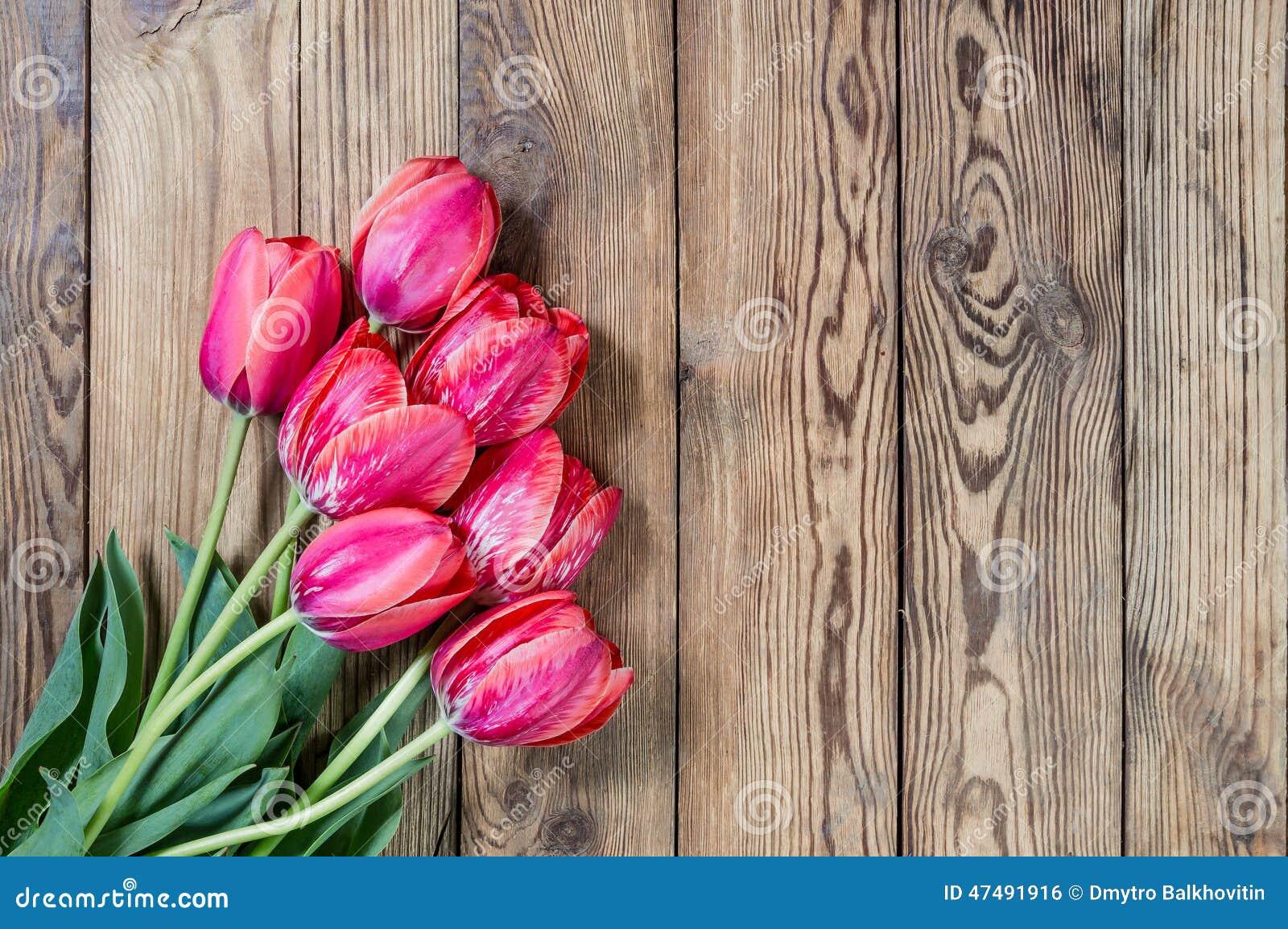 Flores preciosas del tulip n foto de archivo imagen 47491916 - Fotos flores preciosas ...