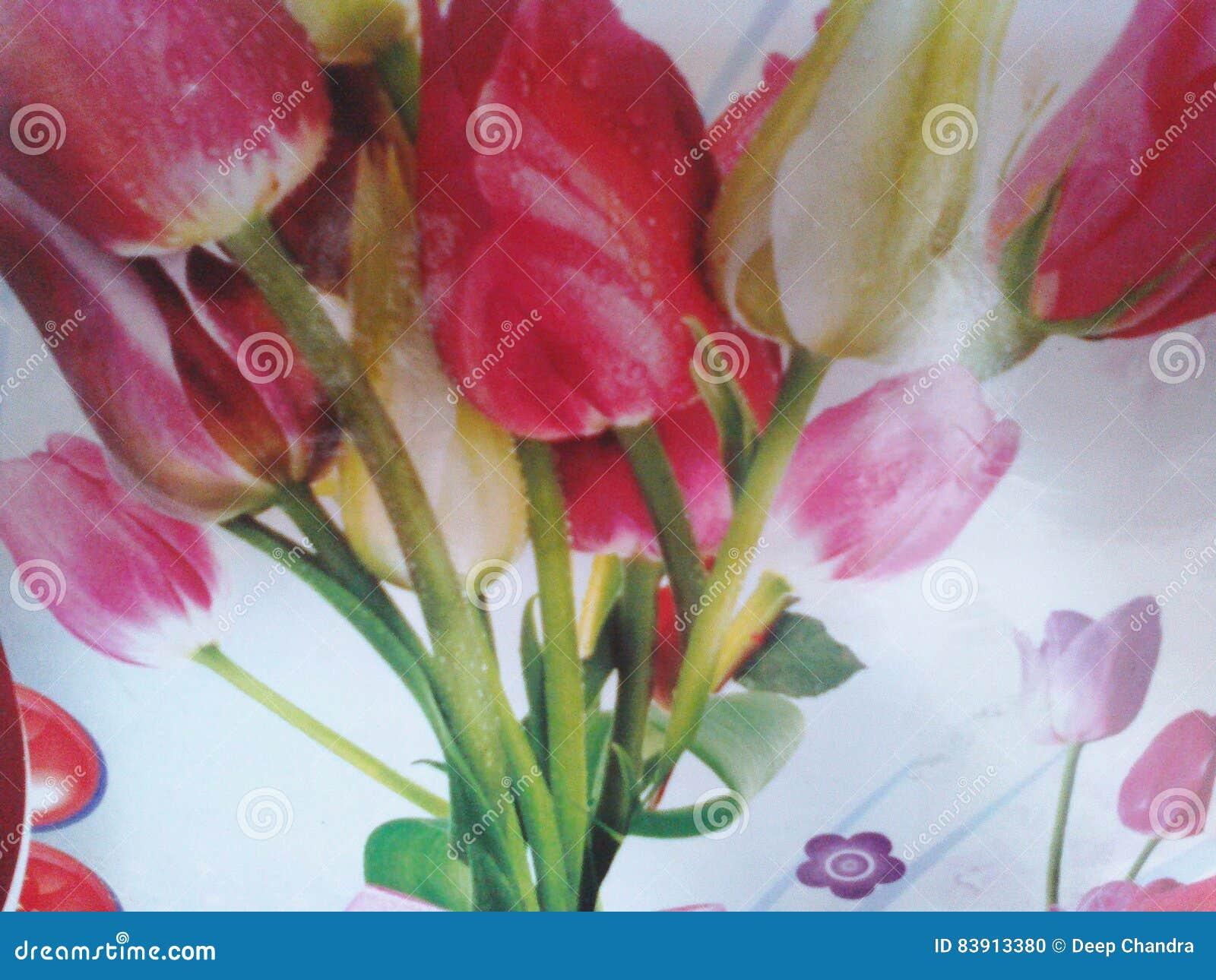 flores preciosas naturales