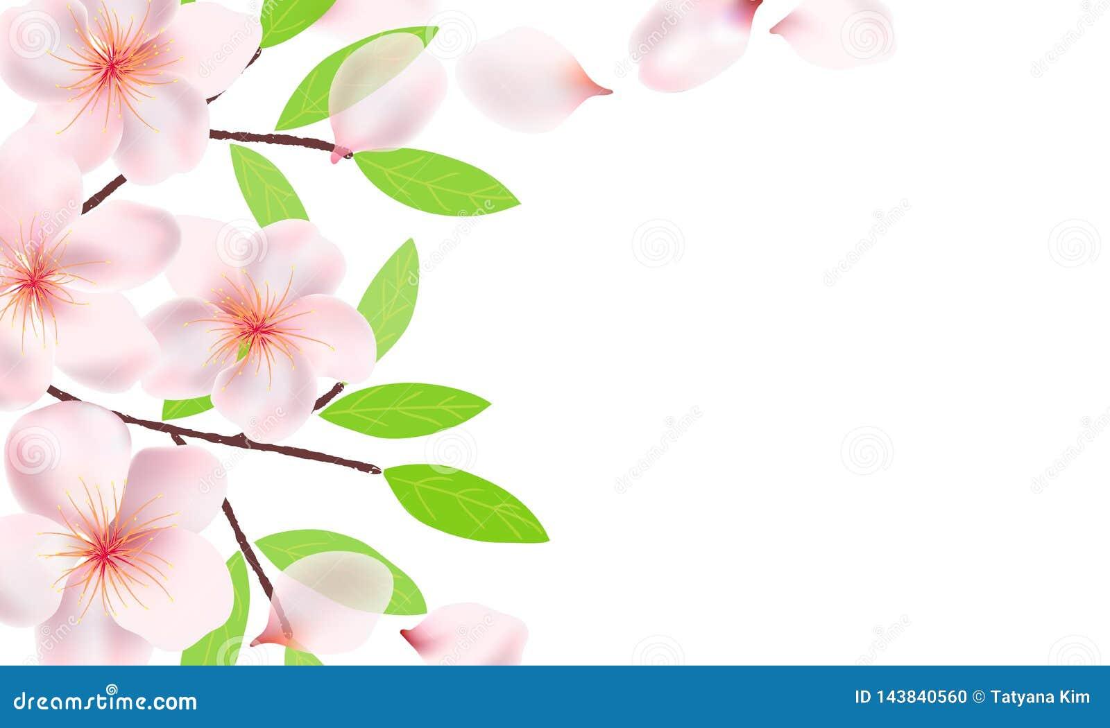 Flores Ramos E Folhas Do Fundo De Sakura Flores De Cerejeira