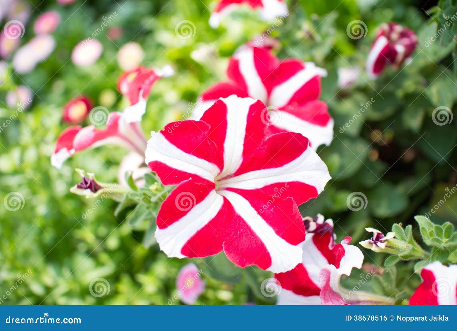 Flores Raras Foto De Stock Imagem De Flor Planta Candid 38678516