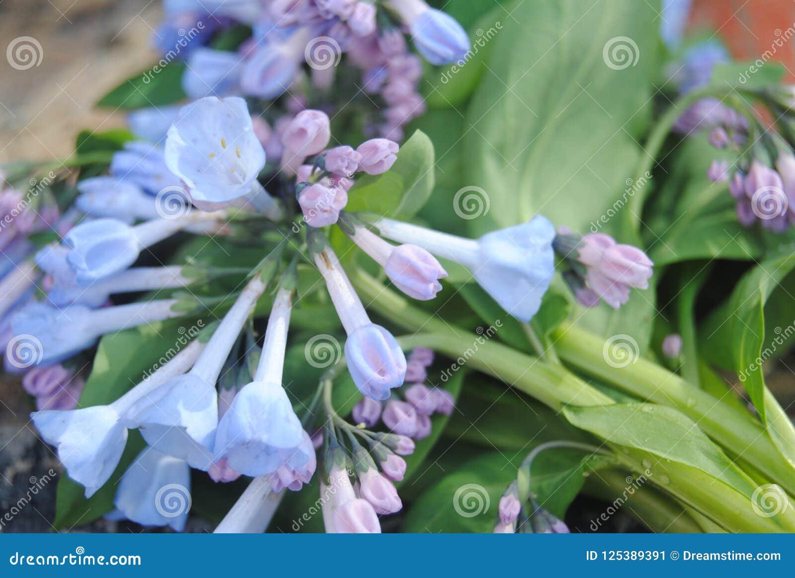 Flores Raras Del Rio De Blurple Imagen De Archivo Imagen De