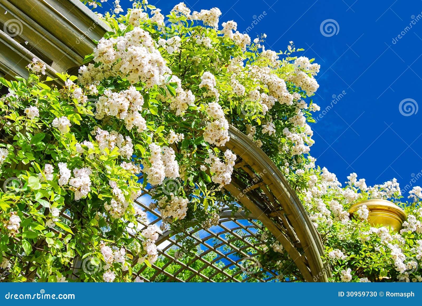 flores rizadas iluminadas por el sol en los jardines de versalles foto de archivo