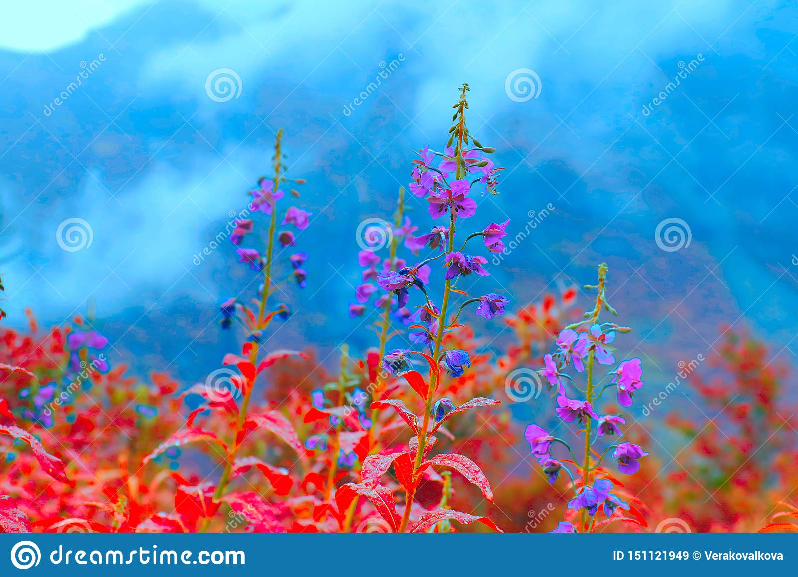 Flores rojas y azules del medow septentrional Flores salvajes coloridas hermosas de las montañas