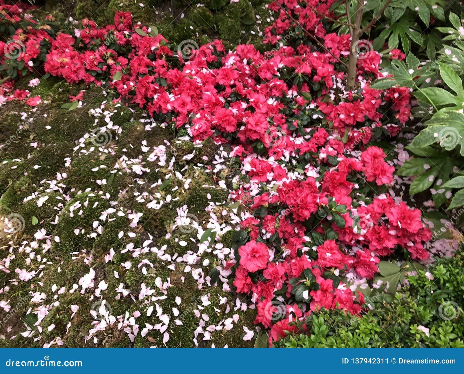 Flores rojas y blancas en jardines por la bahía Singapur