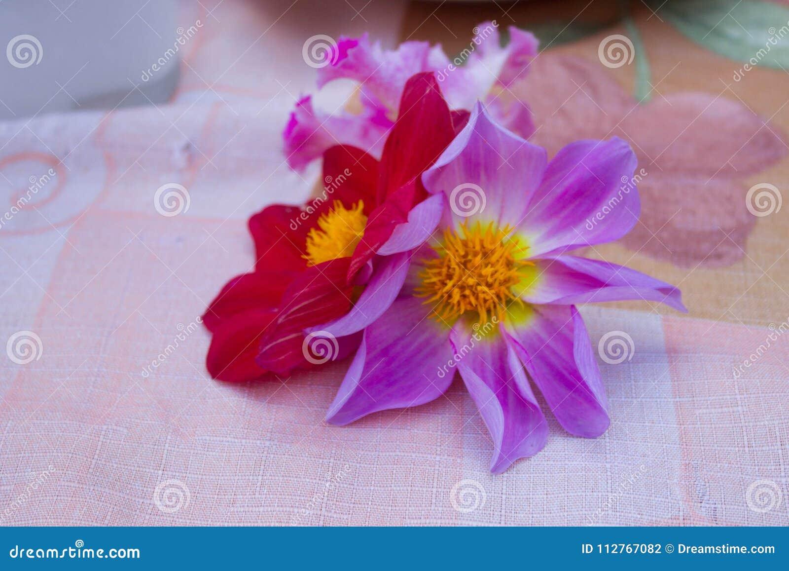 Flores rojas y púrpuras magníficas