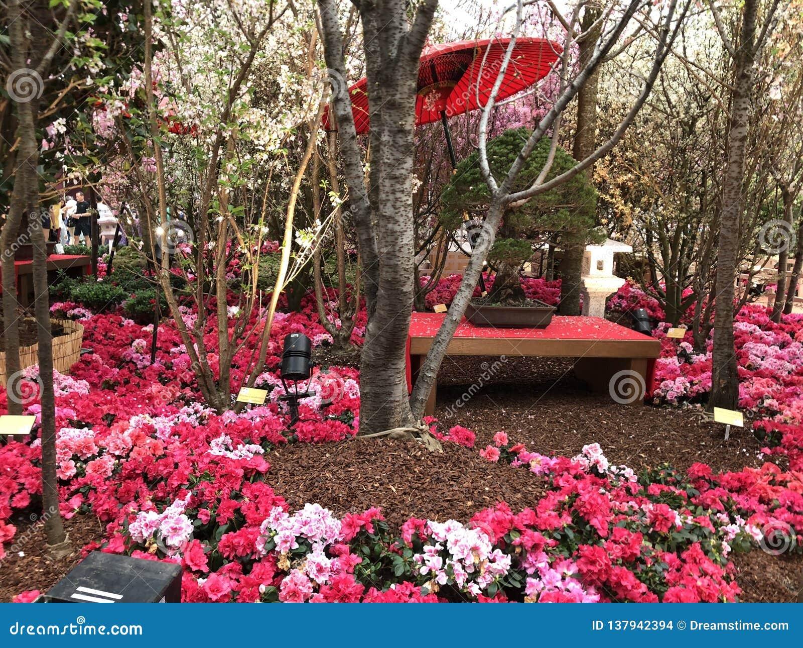 Flores rojas y rosadas en los jardines por la bahía Singapur