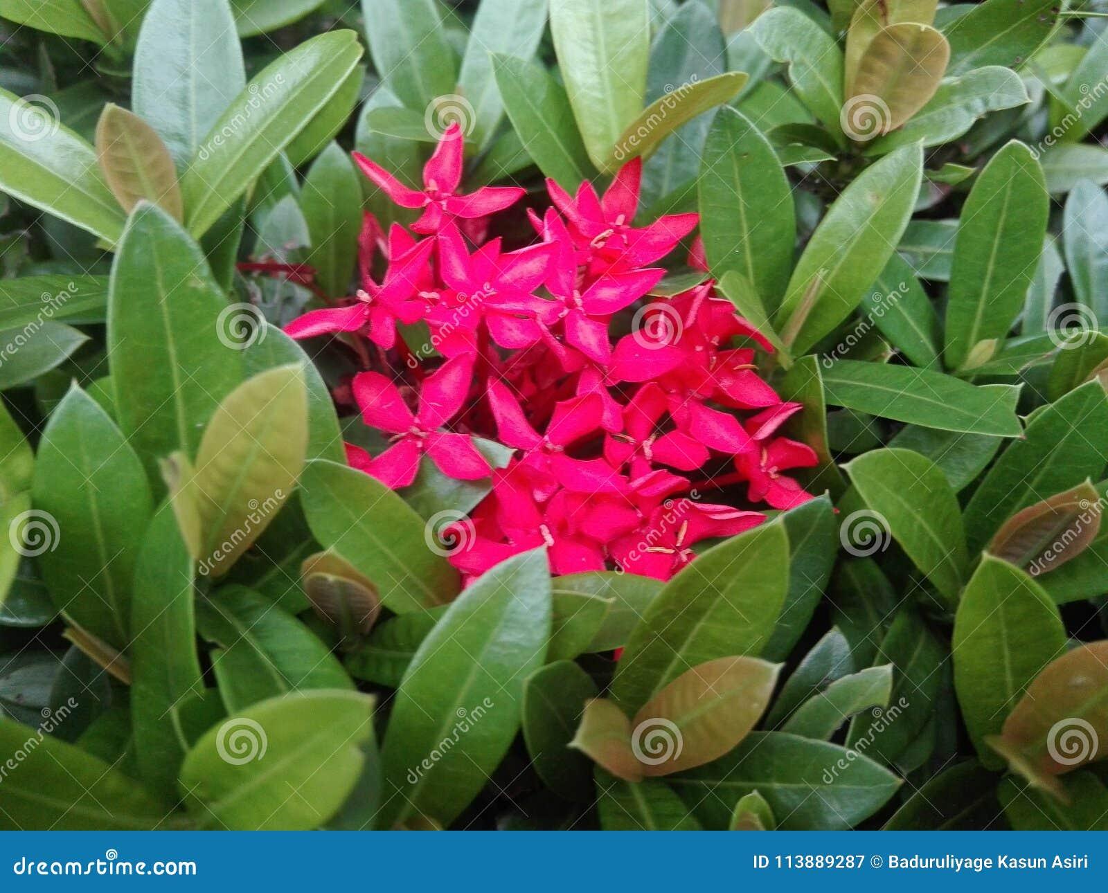 Flores rojizas atractivas con las hojas verde vestidas