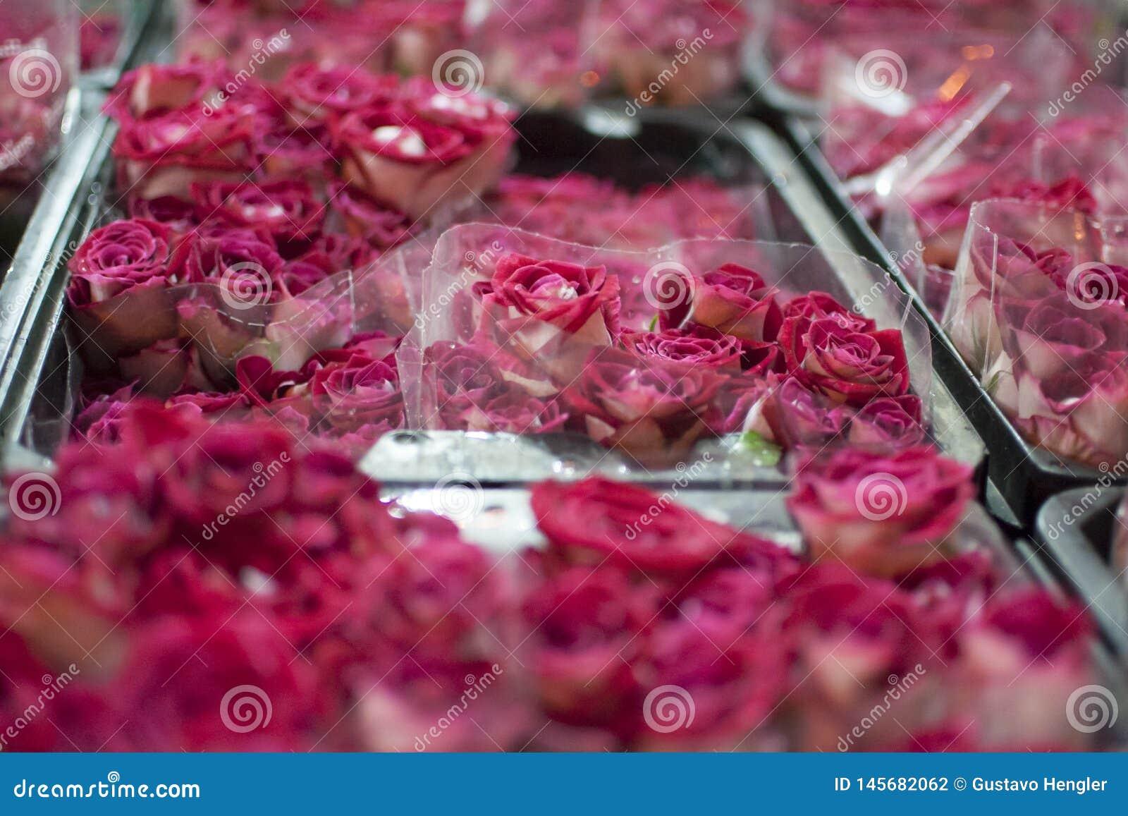 Flores rosa e roxo