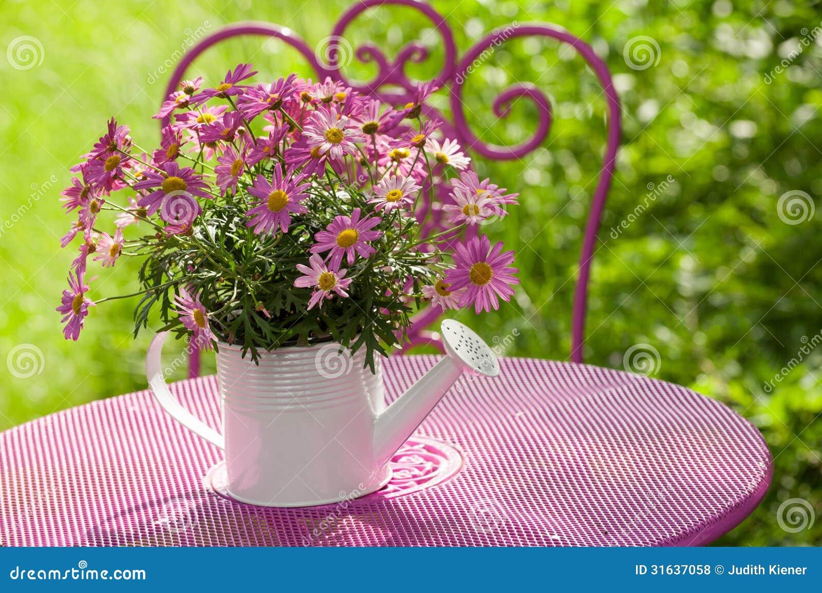 Flores rosadas de la margarita en maceta fotos de archivo - Flores de maceta ...
