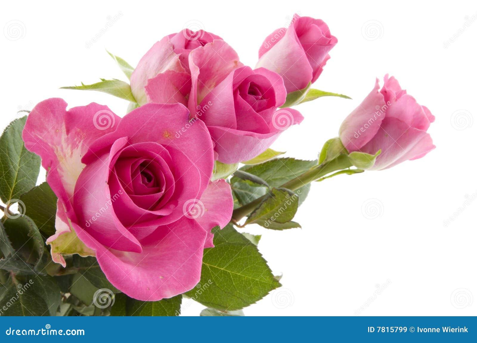 Flores Rosadas De Las Rosas Imagen De Archivo Imagen De Flor