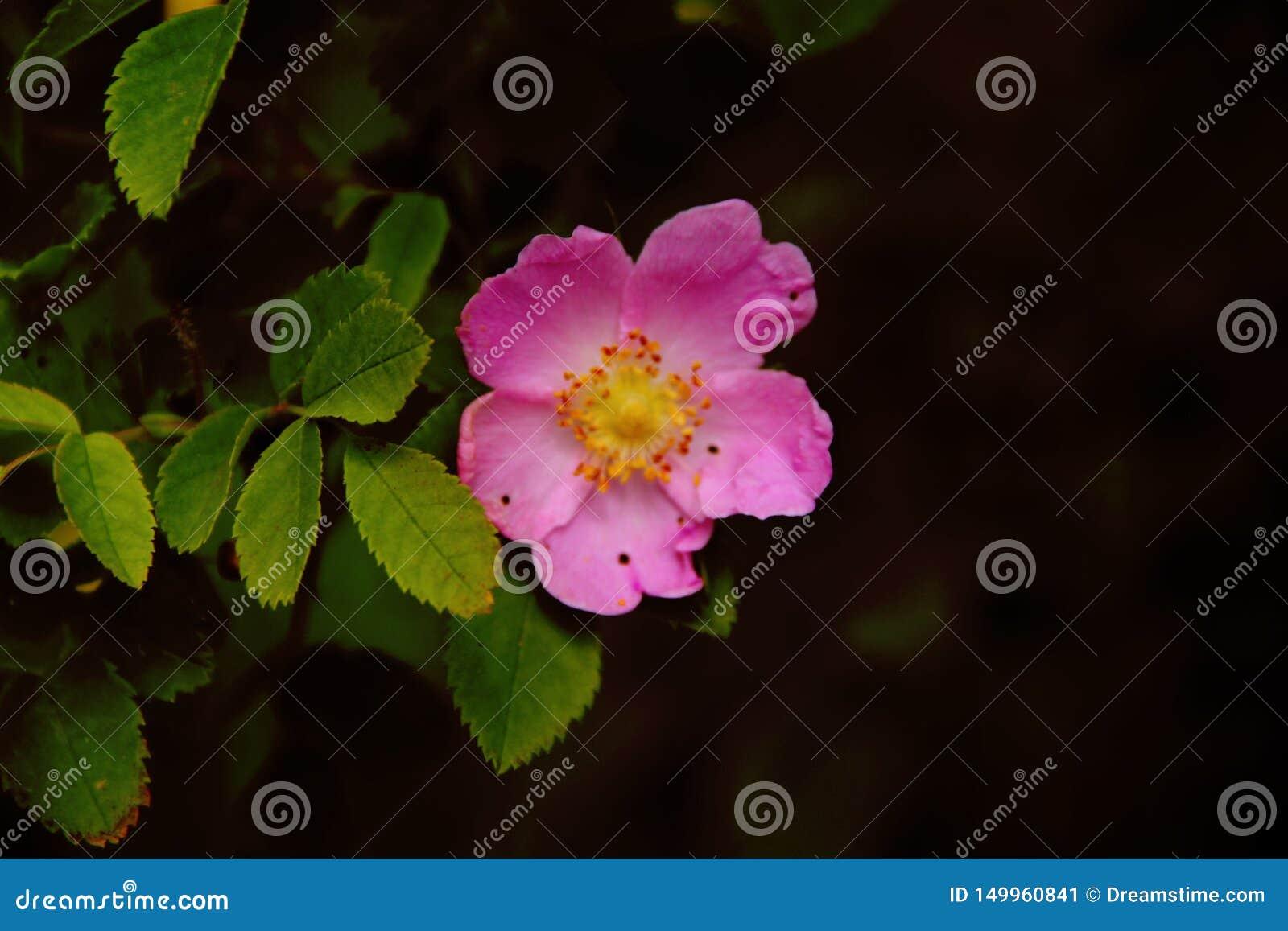Flores rosadas hermosas en el parque