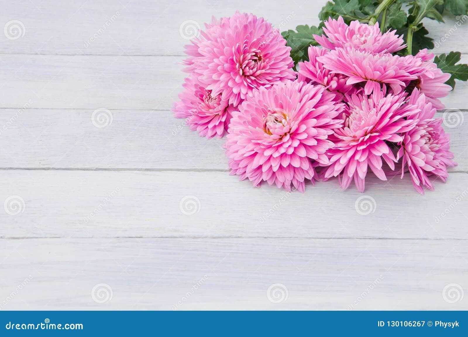 Flores rosas claras apacibles de crisantemos en vagos de madera blancos