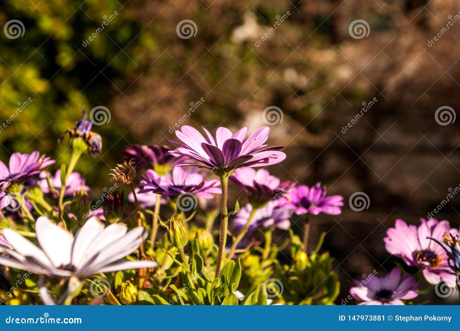Flores roxas com fundo borrado