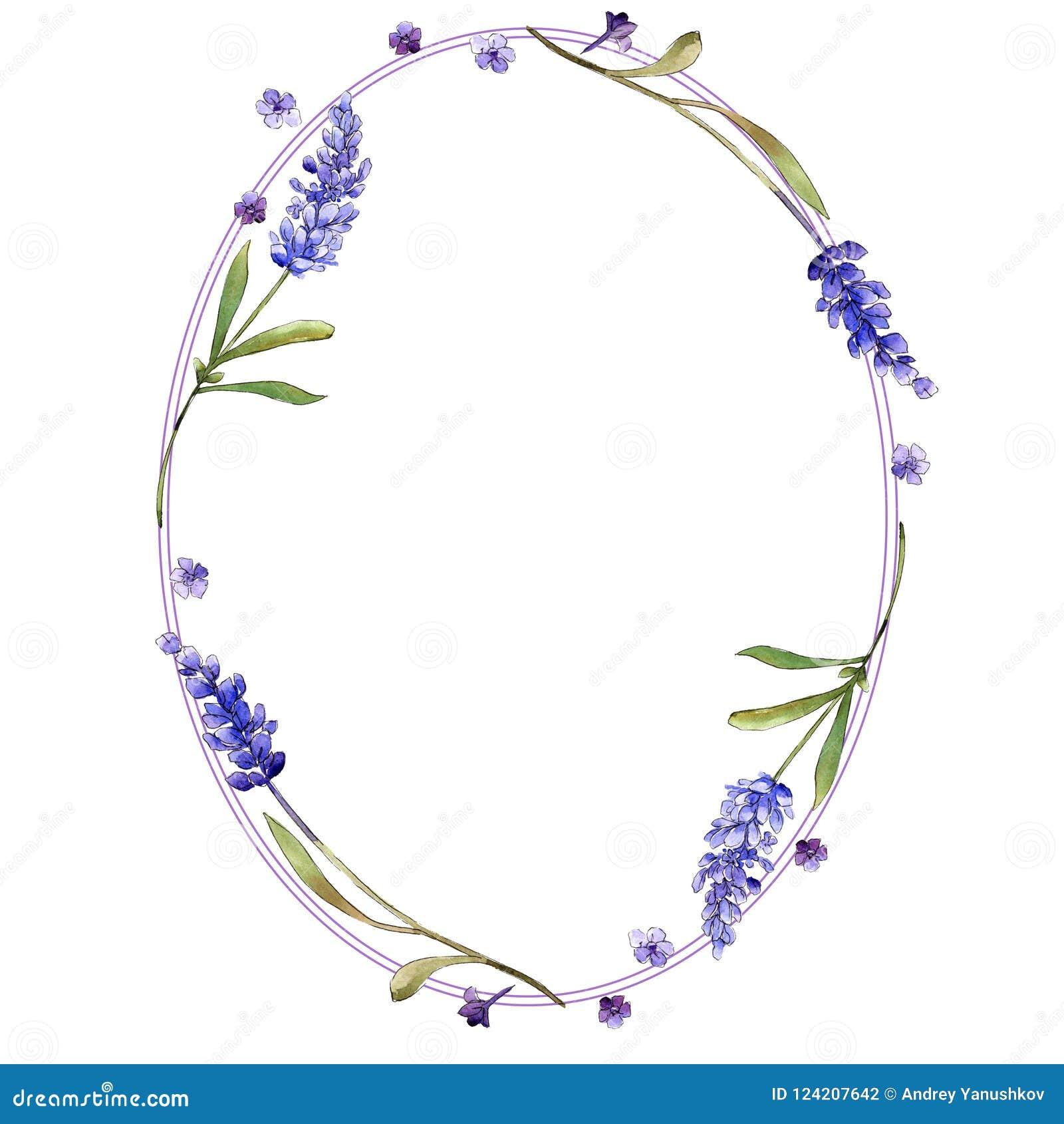 Flores roxas da alfazema da aquarela Flor botânica floral Quadrado do ornamento da beira do quadro