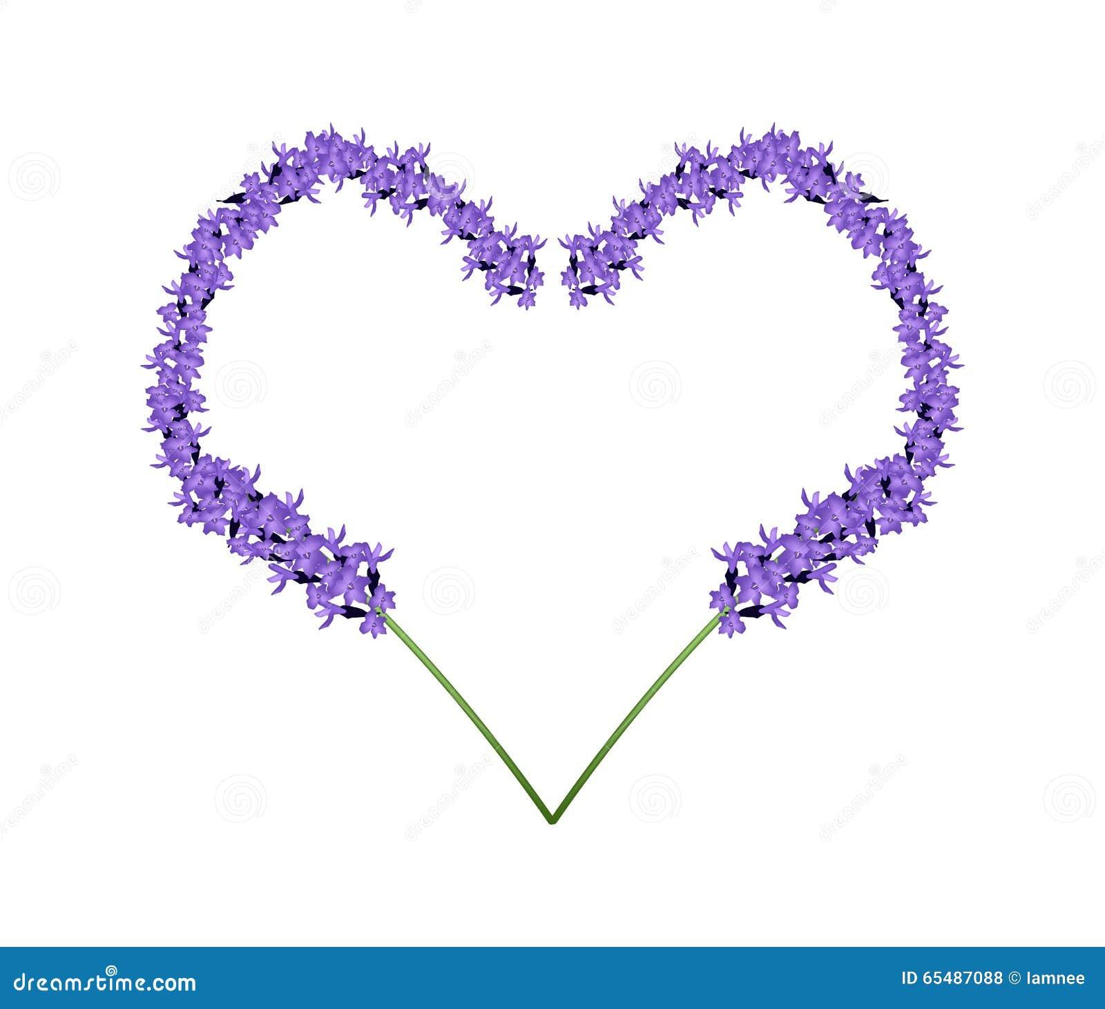 Flores roxas da alfazema no quadro da forma do coração