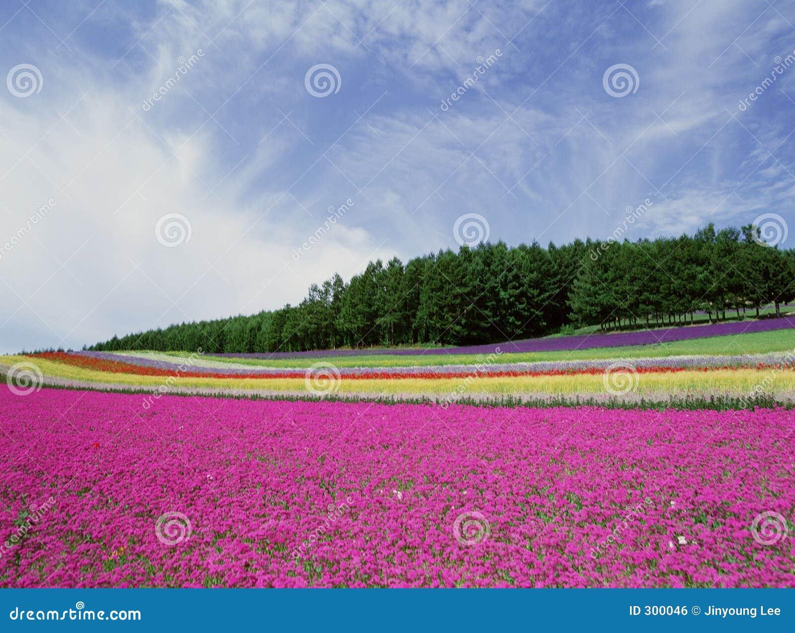 Flores salvajes algún grano visible