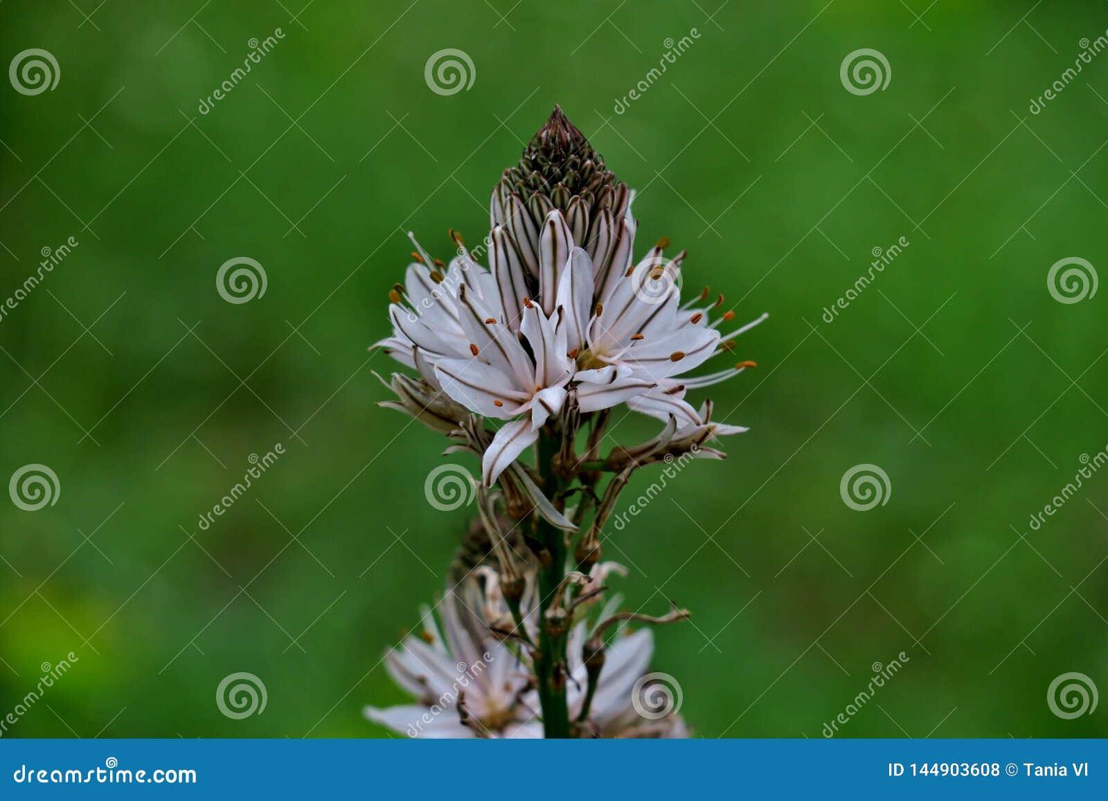 Flores salvajes blancas en el medio del bosque en la hierba verde