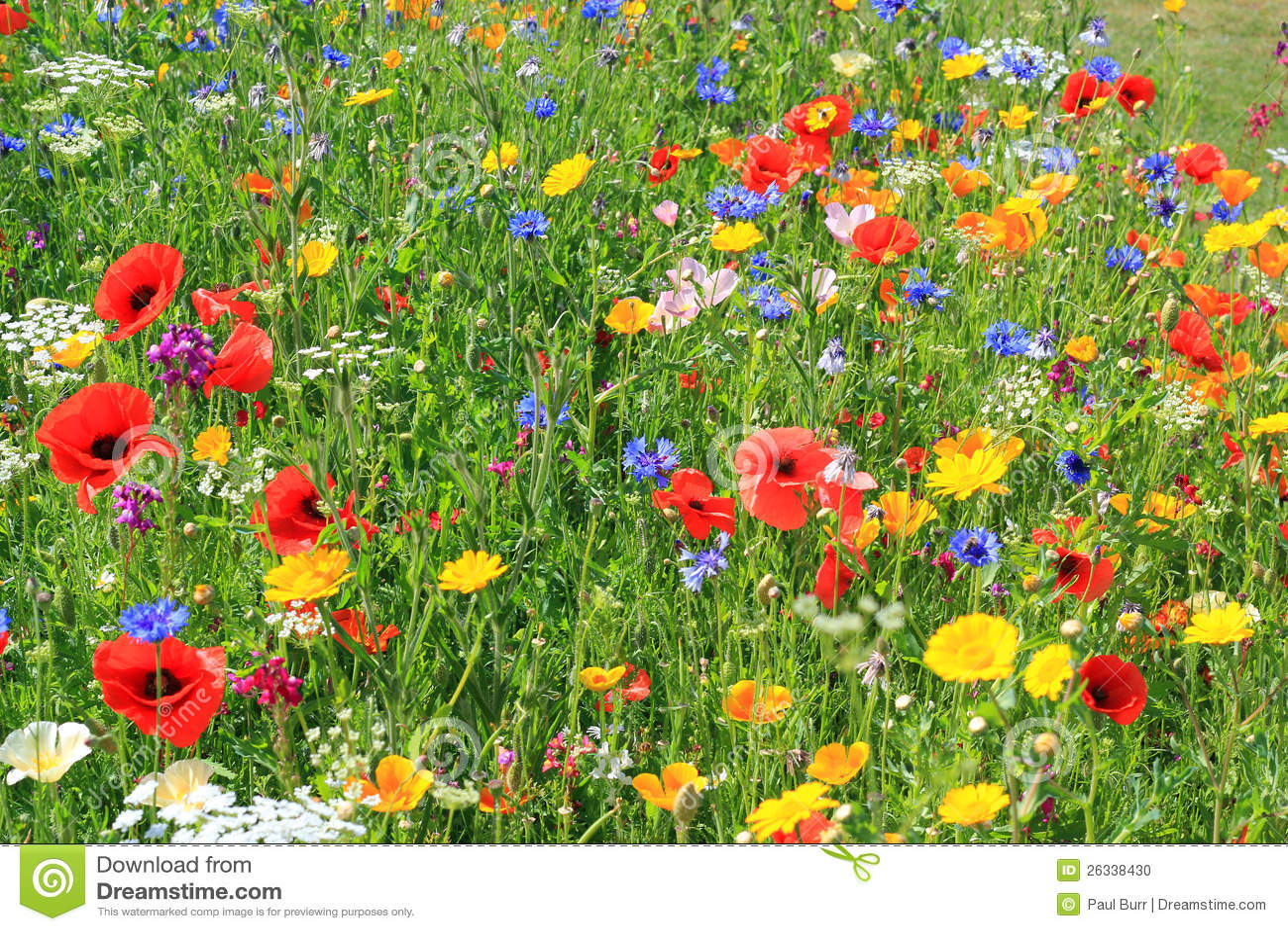 Flores salvajes hermosas.