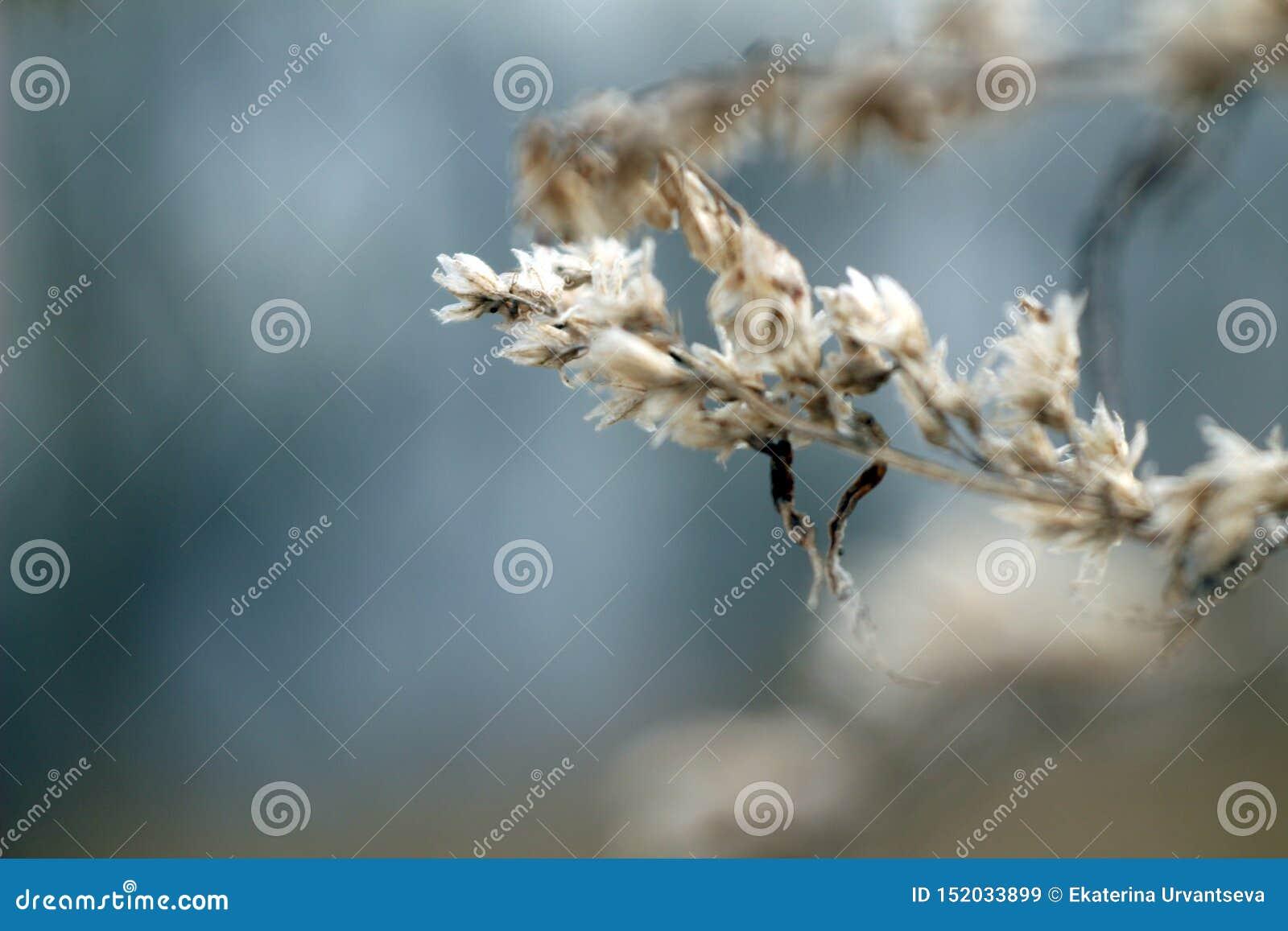 Flores secas de la foto macra en ramas marrones