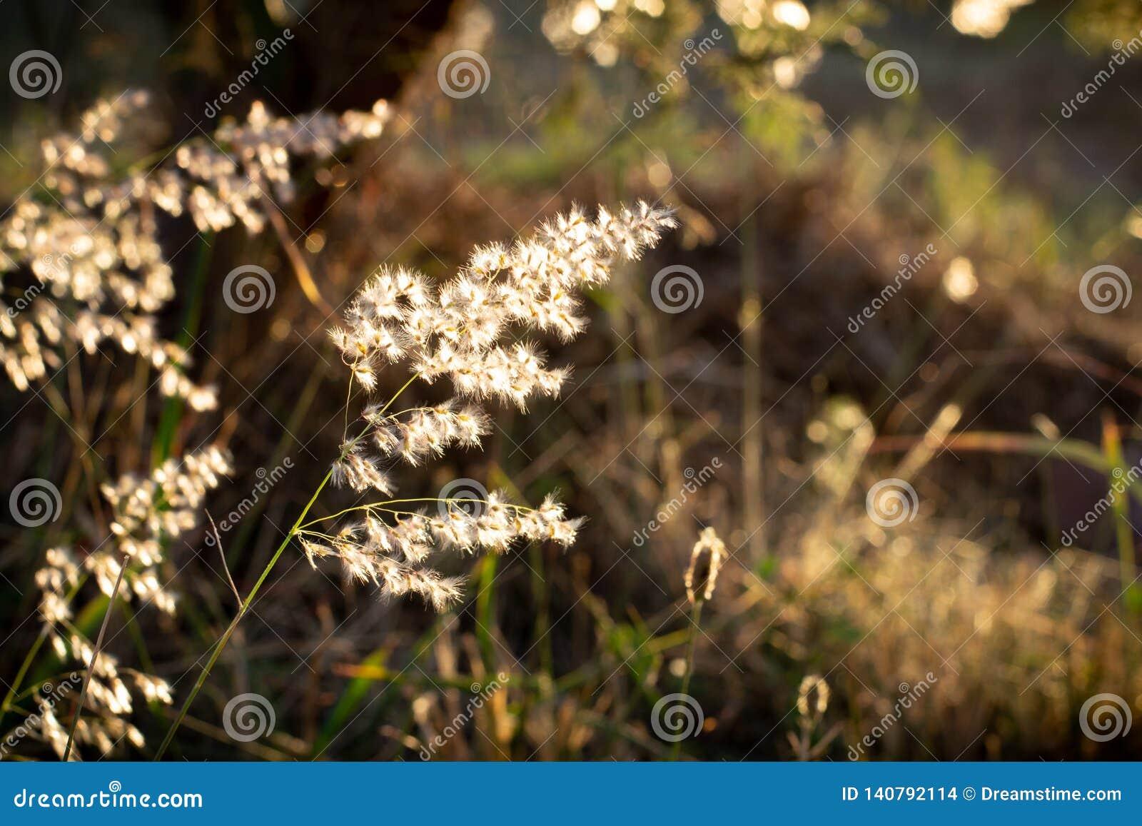 Flores selvagens iluminadas na hora dourada