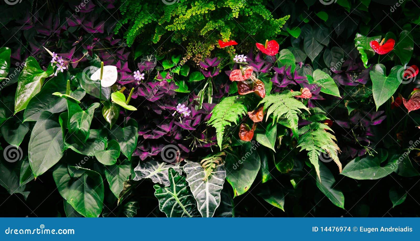 flores tropicais jardim: jardim vertical completamente de plantas tropicais e de flores