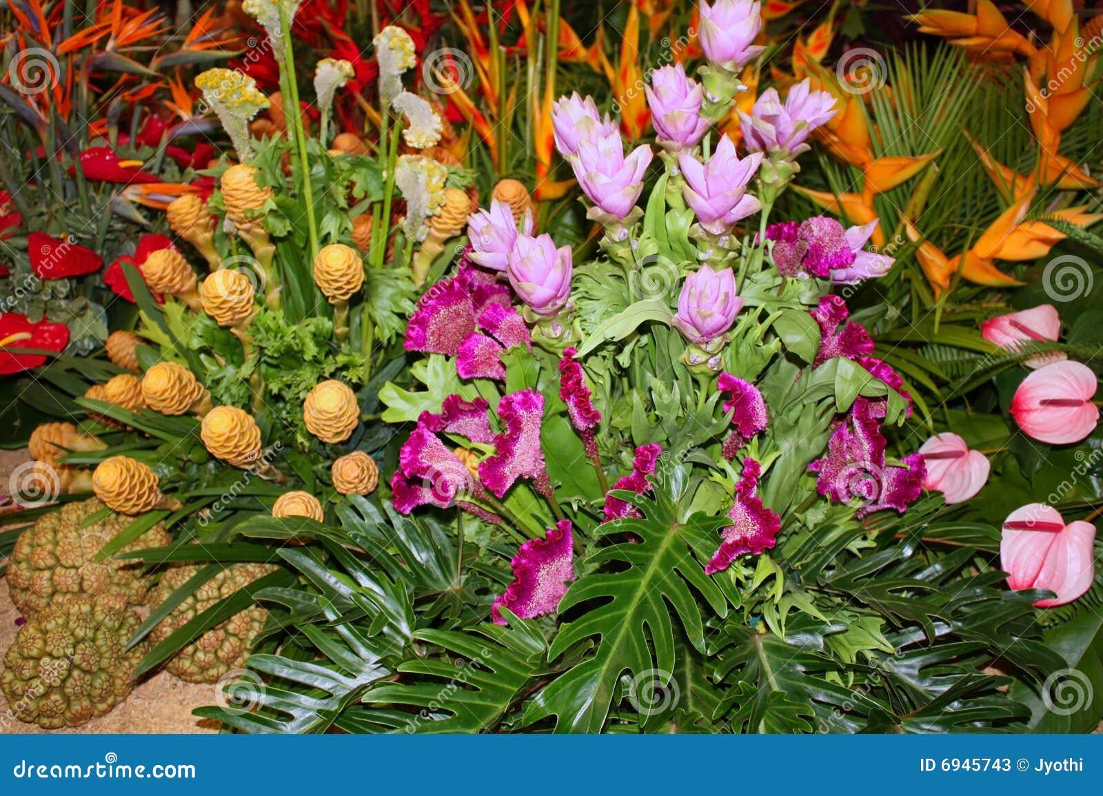 Flores tropicales fotos de archivo imagen 6945743 - Flores tropicales fotos ...