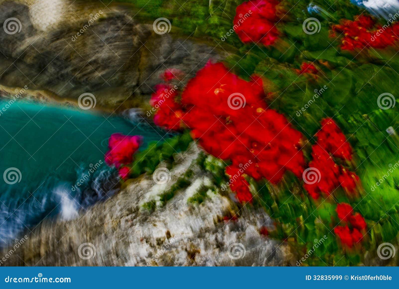 Flores Tropicales Con La Falta De Definición De Movimiento Imagen De